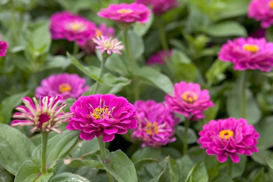 Moja kvetinova farma  :-) - Obrázok č. 69