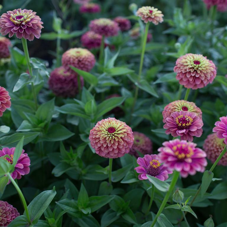 Moja kvetinova farma  :-) - Obrázok č. 72