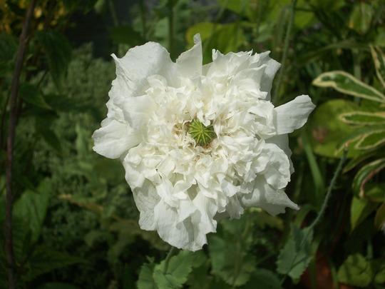 Moja kvetinova farma  :-) - Obrázok č. 5