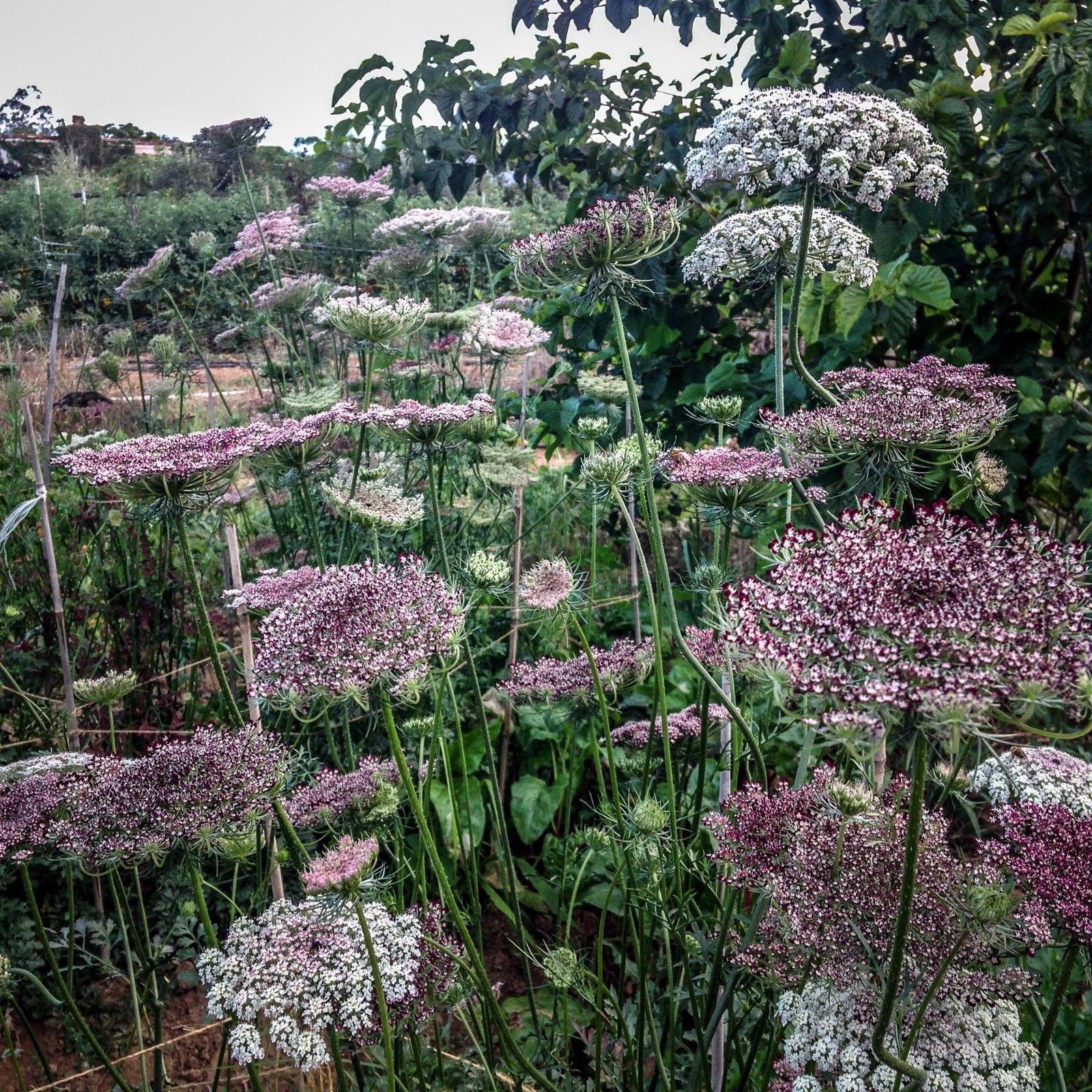 Moja kvetinova farma  :-) - Obrázok č. 82