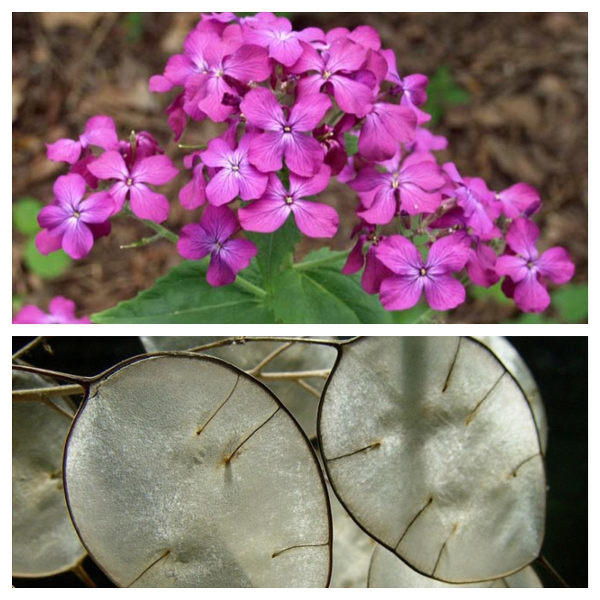 Moja kvetinova farma  :-) - Obrázok č. 71