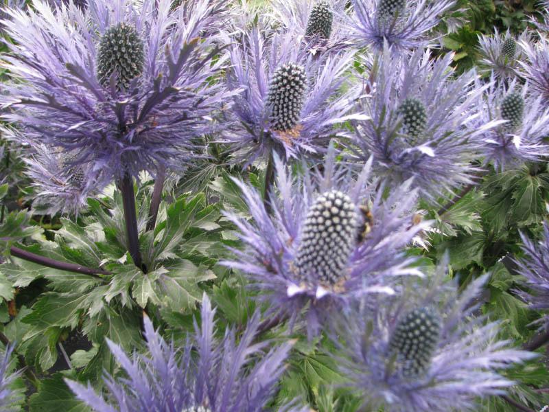 Moja kvetinova farma  :-) - Obrázok č. 81
