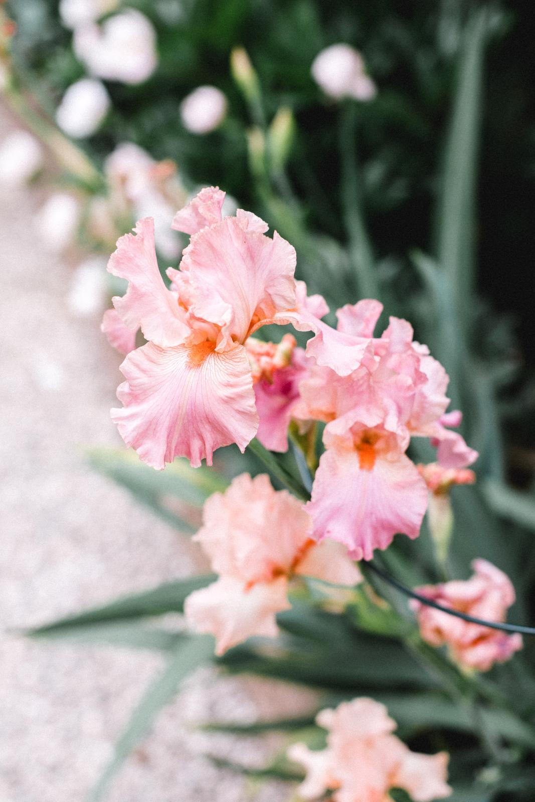 Terasa+ zahrada vzadu.. - Obrázok č. 55