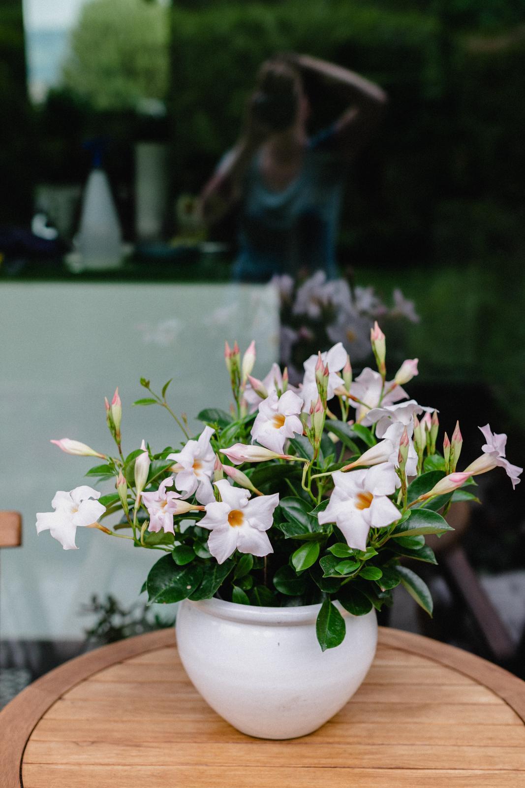 Terasa+ zahrada vzadu.. - Obrázok č. 77