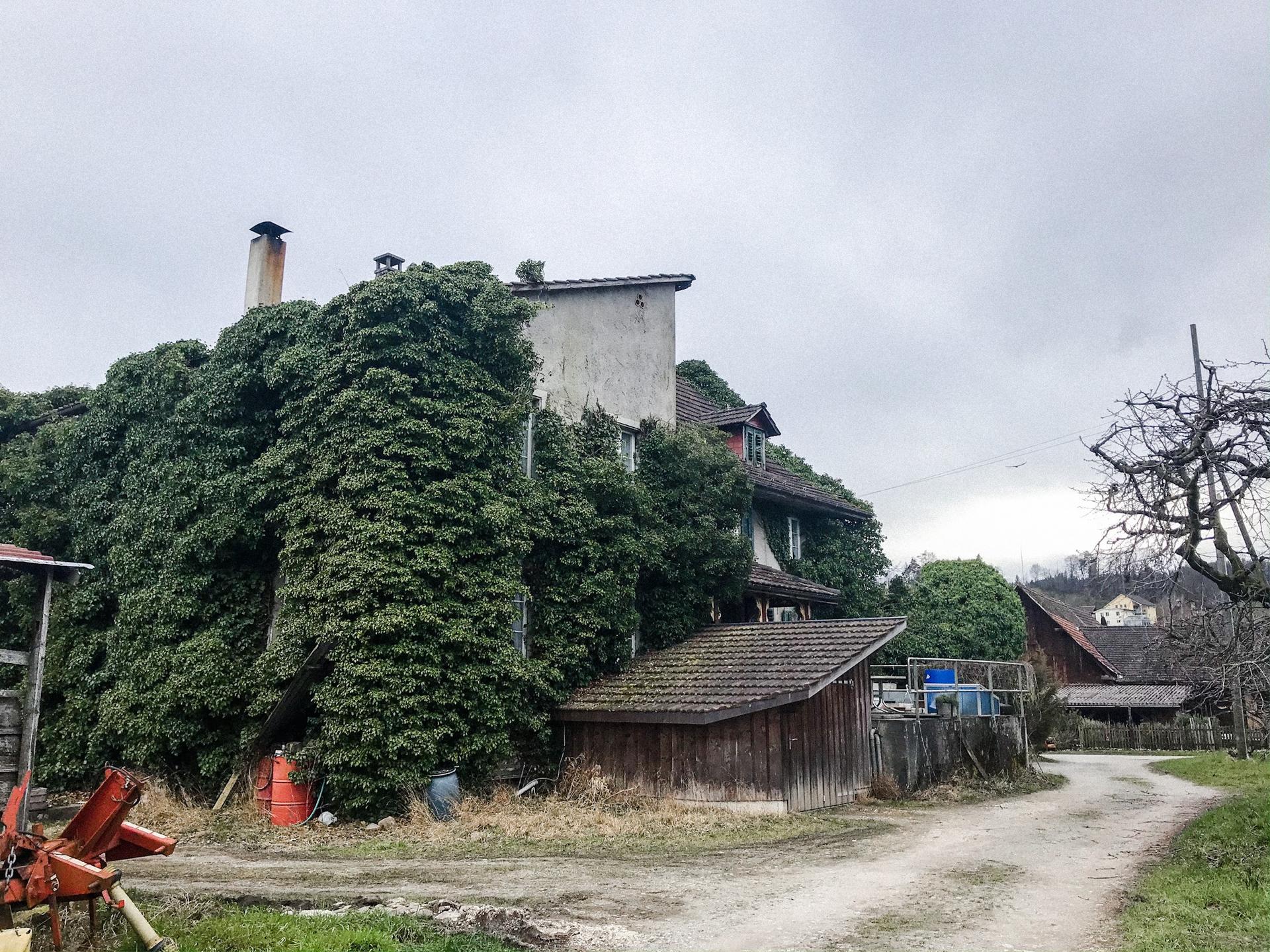 Zaciname 2020 bude farebnejsi :-) - Toto je dom cely obrasteny brectanom.. nabuduce odfotim z predu.. ❤️