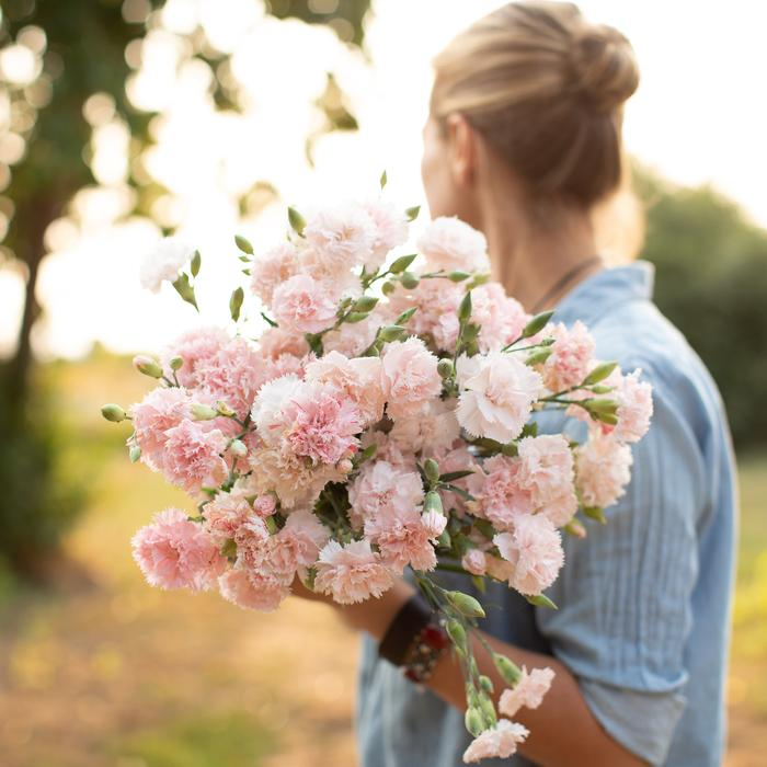 Zaciname 2020 bude farebnejsi :-) - tieto hrebicky milujem, mam uz doma v kvetinaci, podarilo sa mi rozmnozit az 1 ks :-D ostatne tusim vyschli. tak som objednala este semiacka.. tu vona su spomienky na detstvo..