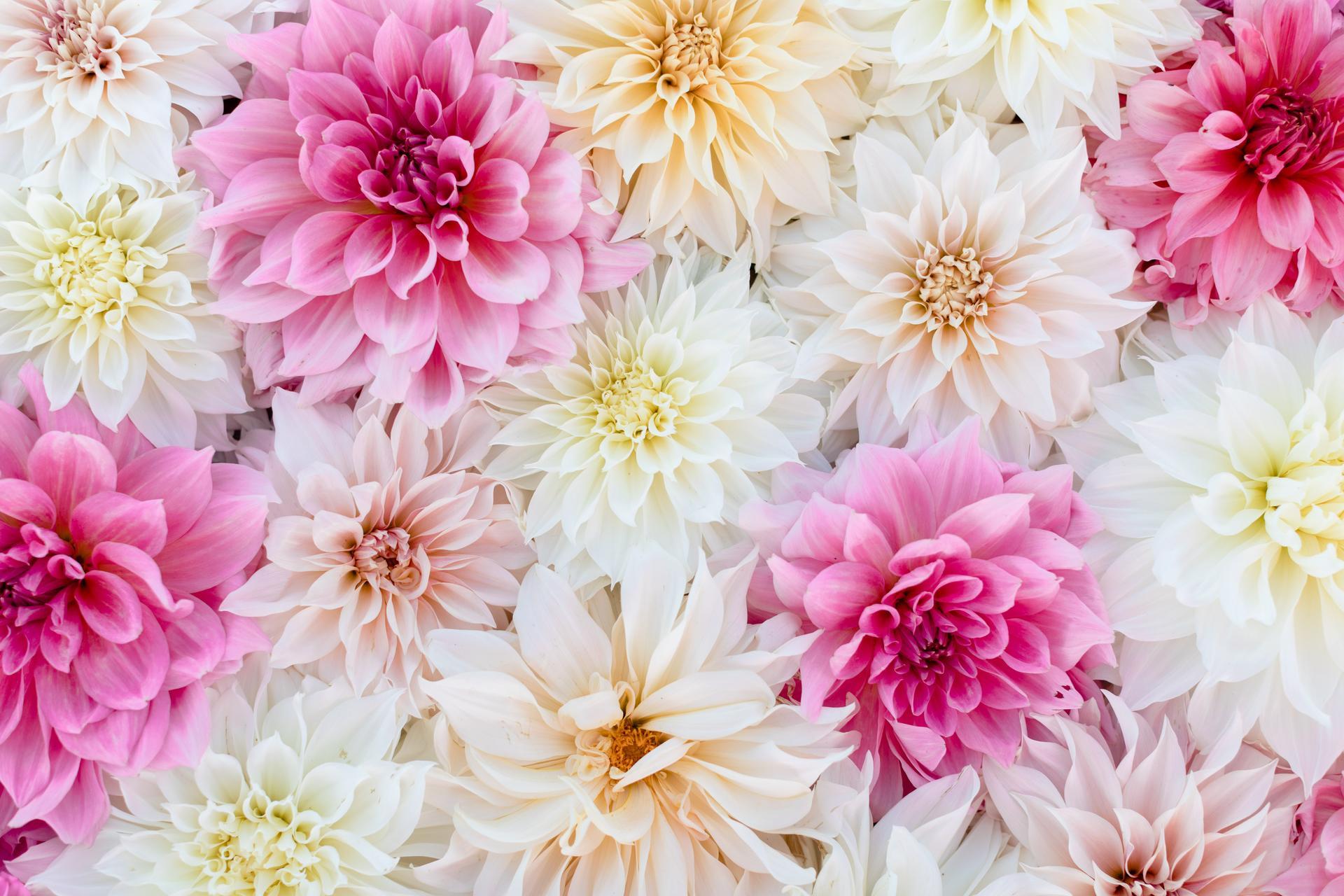 Kvetove dekoracie - Obrázok č. 16