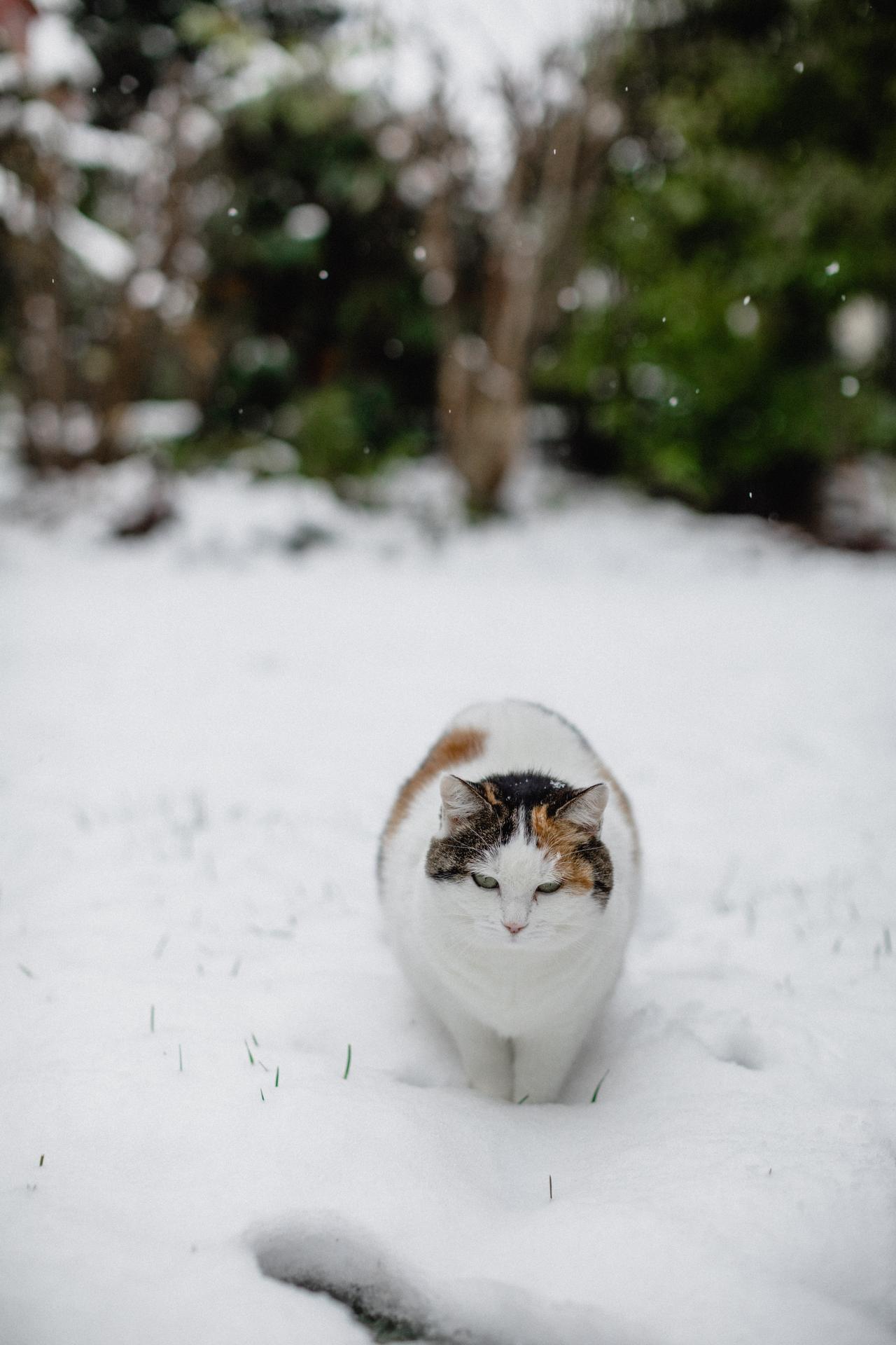 Vianoce 2020 - tu sa niekto tesi zo snehu viac ako deti :-D ciha na gulu ktoru drzim v ruke :-D