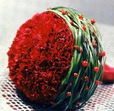Dianthus - karafiát, klinček