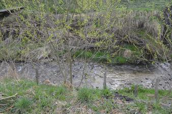 Za pozemkom máme potôčik. Je vyregulovaný, koryto má cca 2m a od domu ho delí takmer 80m.