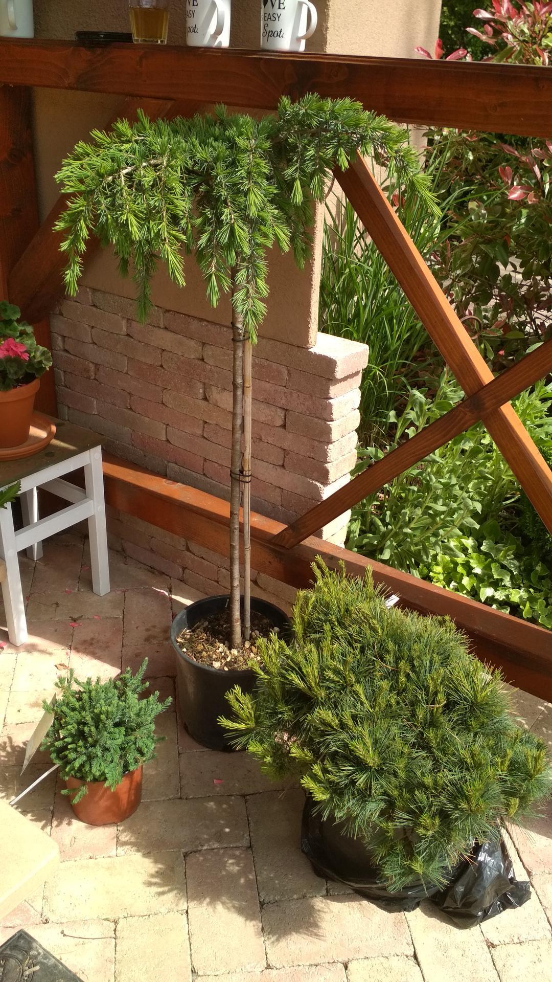 Vodný prvok v záhrade - Obrázok č. 35