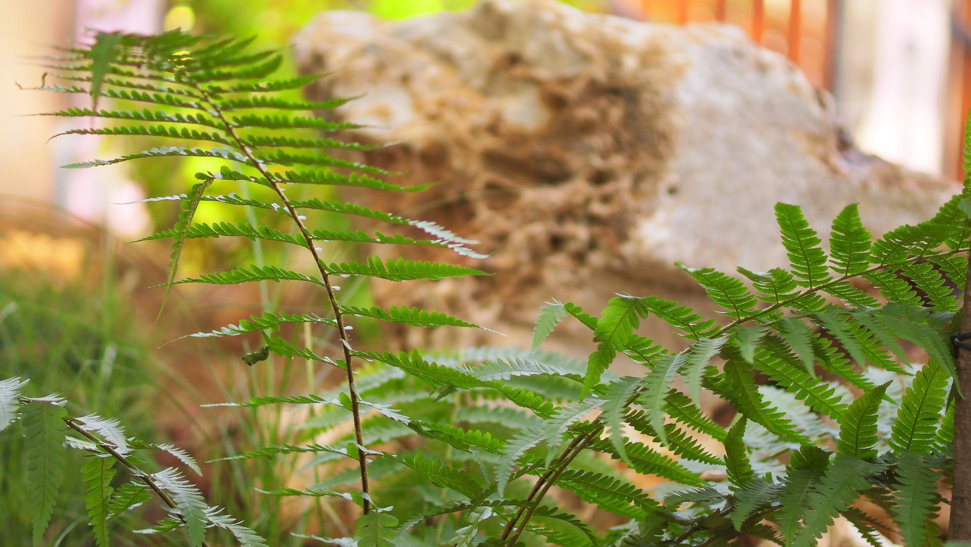 Vodný prvok v záhrade - Obrázok č. 47