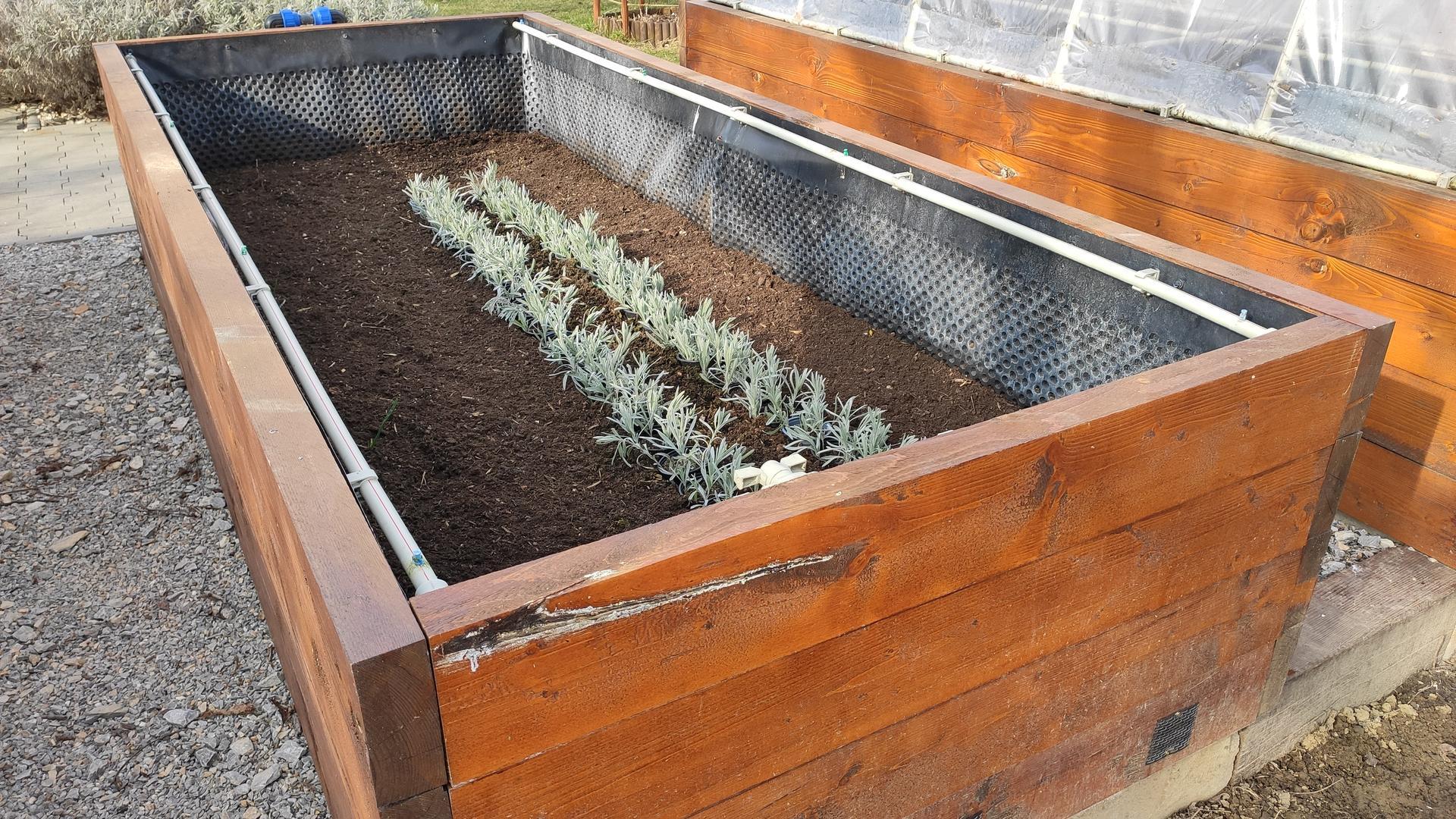 Vyvýšené záhony a úžitková záhrada - sezóna 2021 ... príprava, sadenie, starostlivosť - Obrázok č. 18