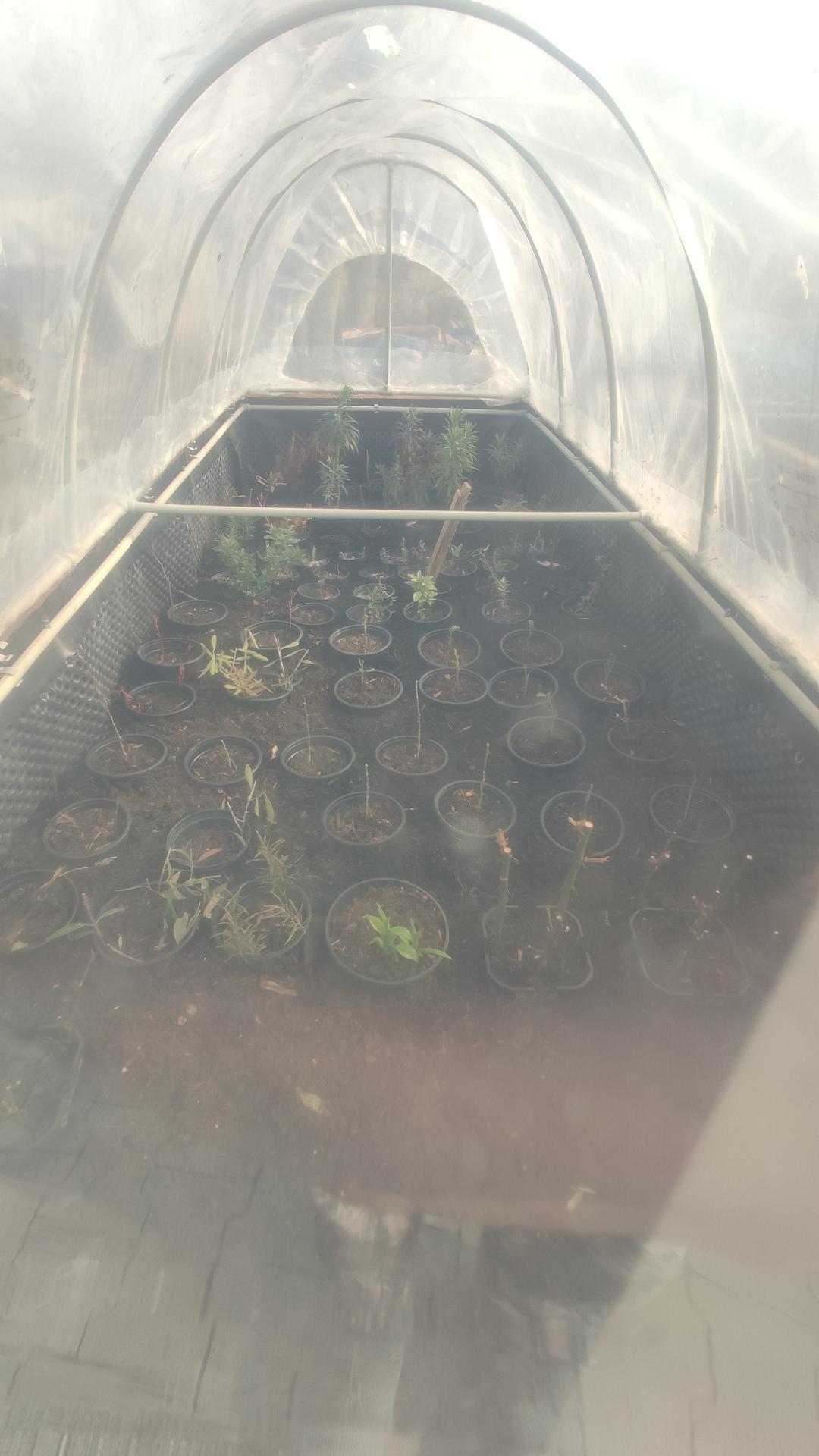 Vyvýšené záhony a úžitková záhrada - sezóna 2021 ... príprava, sadenie, starostlivosť - Obrázok č. 19