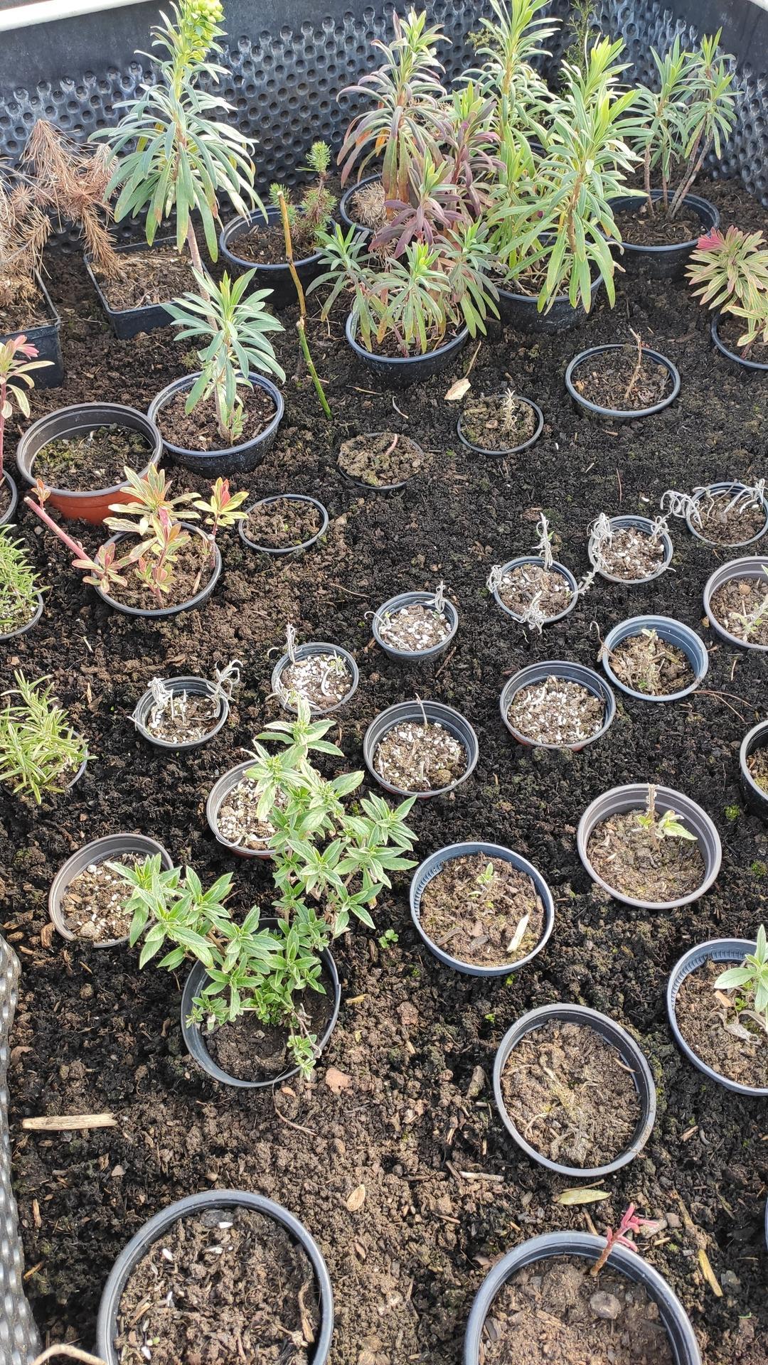 Vyvýšené záhony a úžitková záhrada - sezóna 2021 ... príprava, sadenie, starostlivosť - Obrázok č. 20