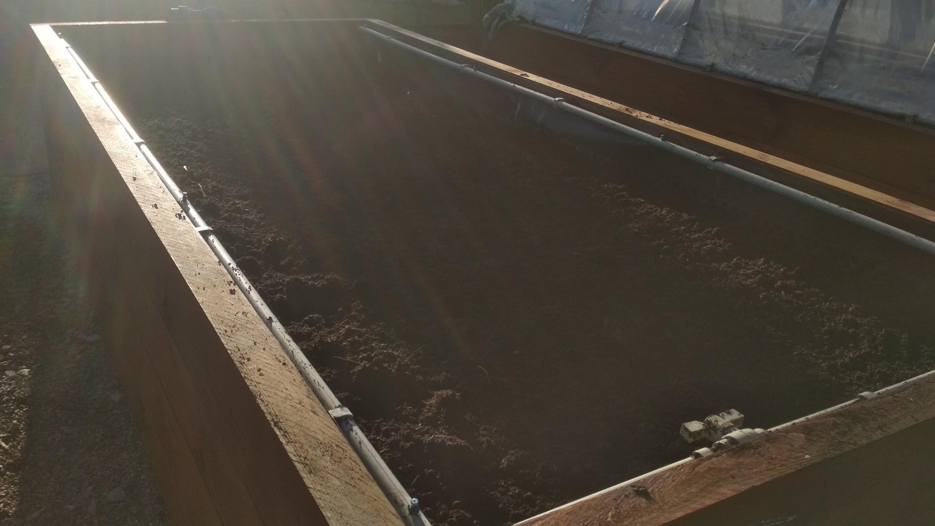 Vyvýšené záhony a úžitková záhrada - sezóna 2021 ... príprava, sadenie, starostlivosť - Obrázok č. 22