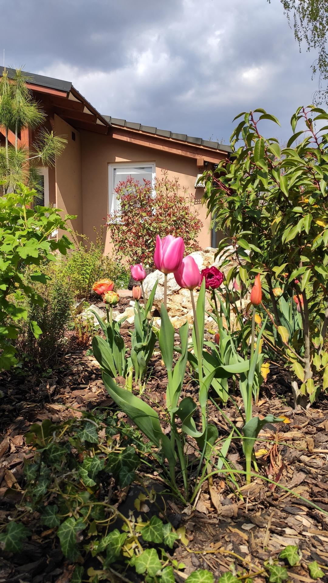 záhrada vidiecka, farebná rok 2021 - Obrázok č. 35