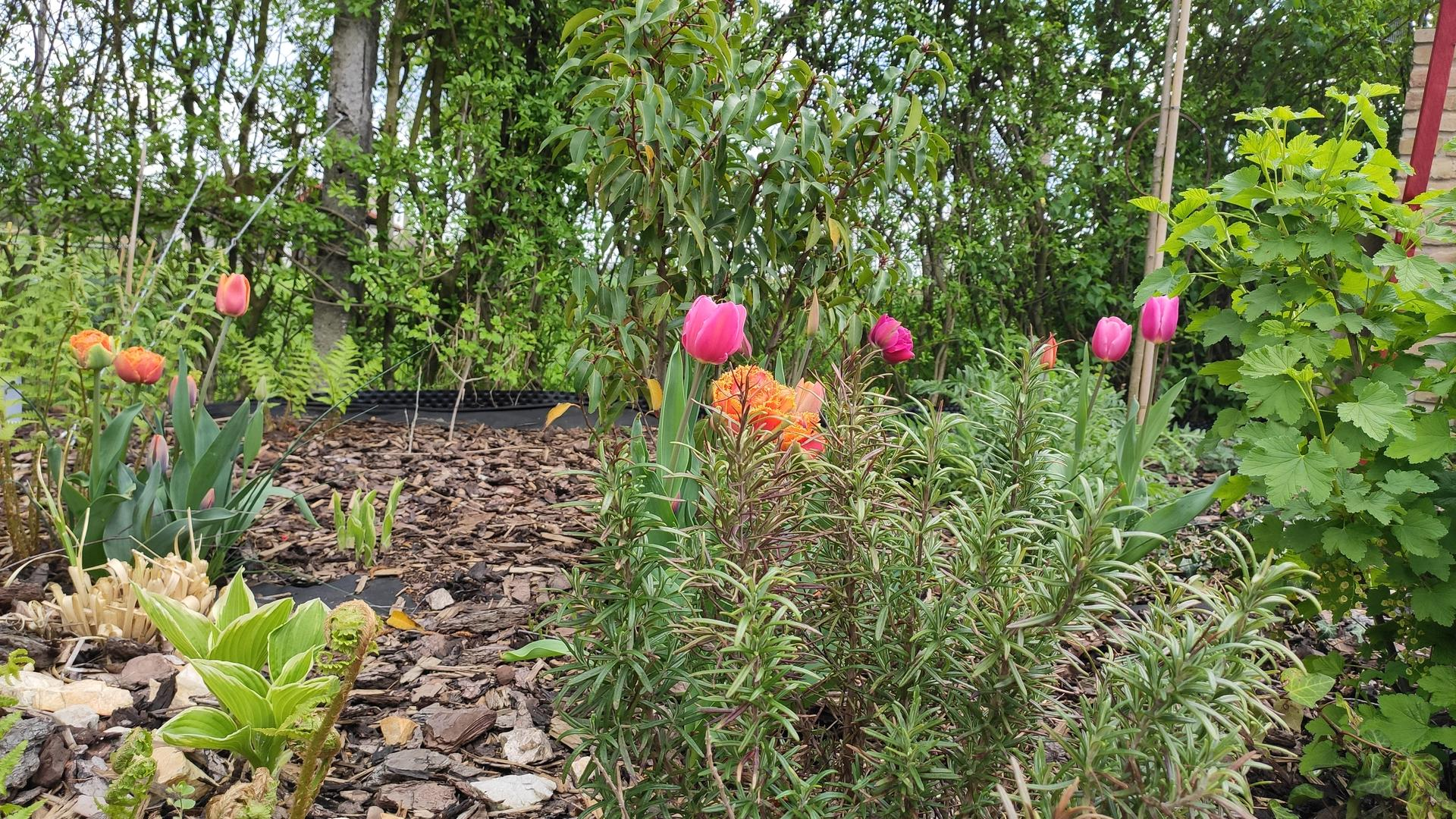záhrada vidiecka, farebná rok 2021 - Obrázok č. 27