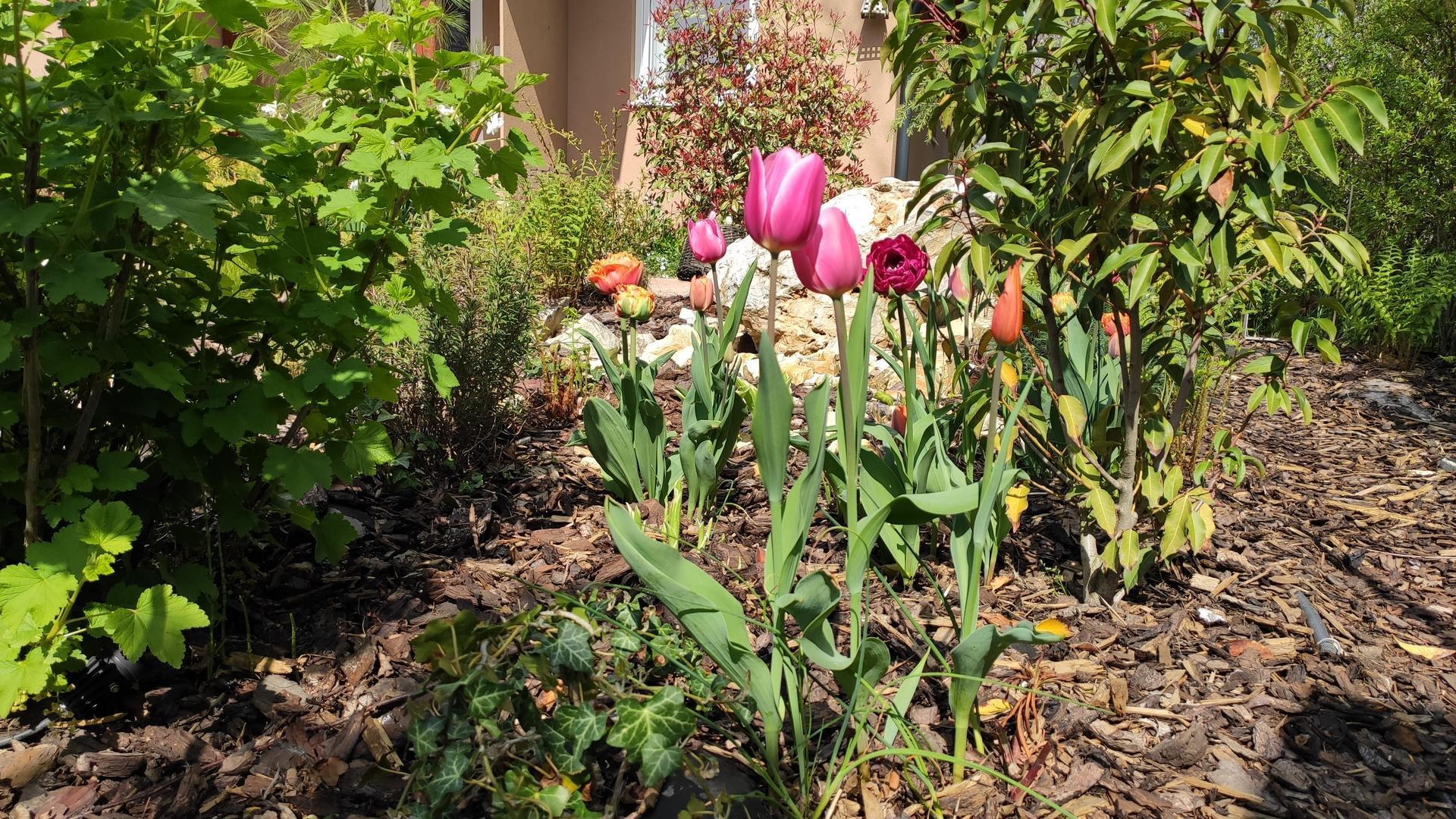 záhrada vidiecka, farebná rok 2021 - Obrázok č. 24