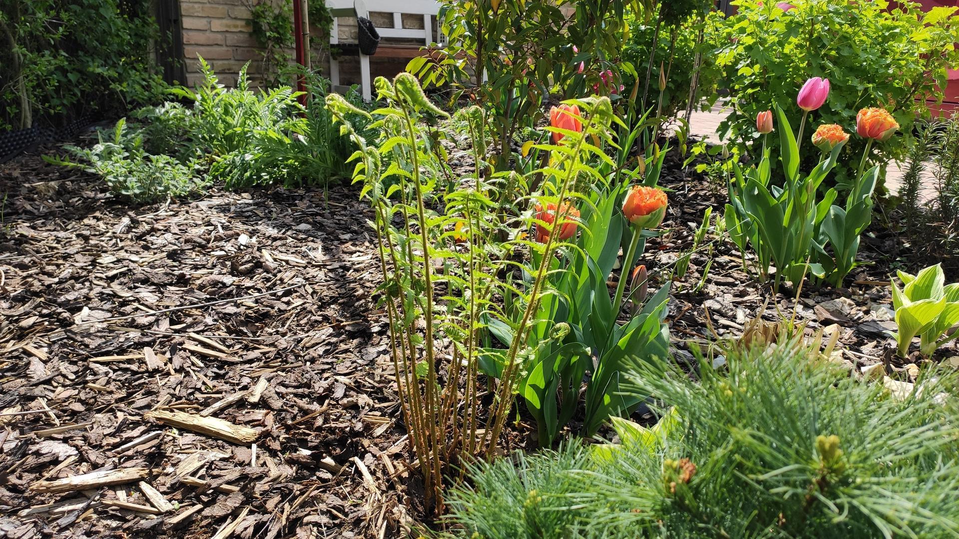záhrada vidiecka, farebná rok 2021 - Obrázok č. 25