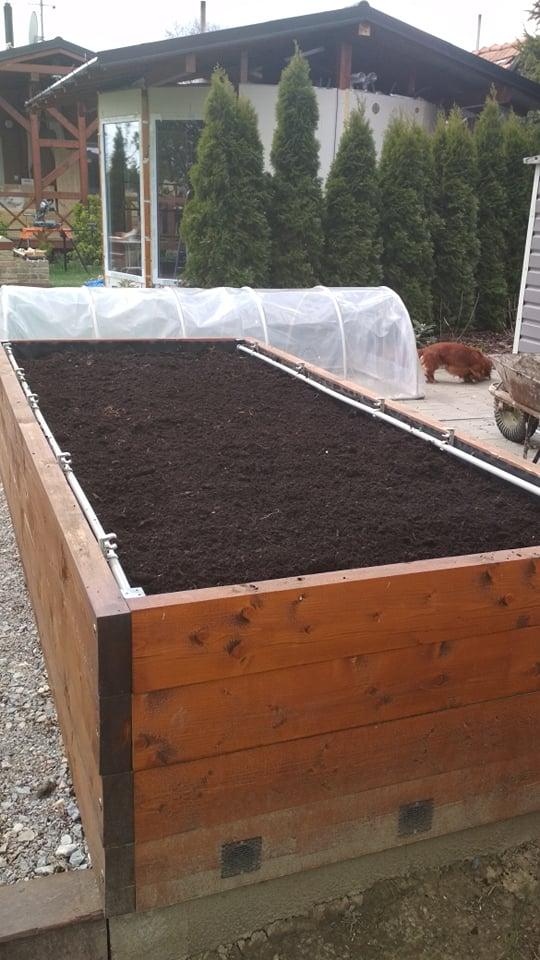 Vyvýšené záhony a úžitková záhrada - sezóna 2021 ... príprava, sadenie, starostlivosť - Obrázok č. 31