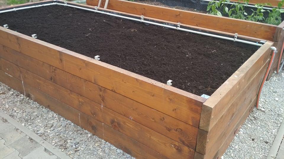 Vyvýšené záhony a úžitková záhrada - sezóna 2021 ... príprava, sadenie, starostlivosť - Obrázok č. 32