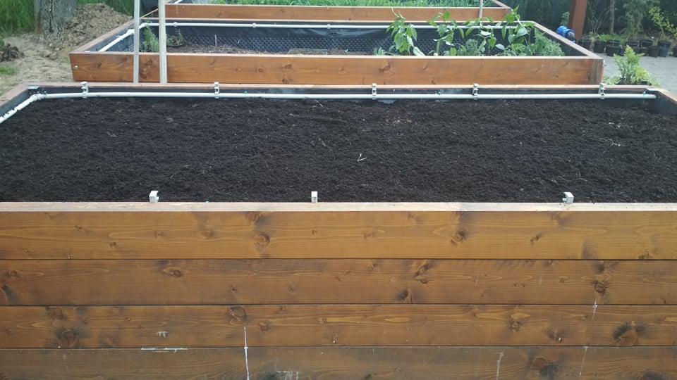 Vyvýšené záhony a úžitková záhrada - sezóna 2021 ... príprava, sadenie, starostlivosť - Obrázok č. 33