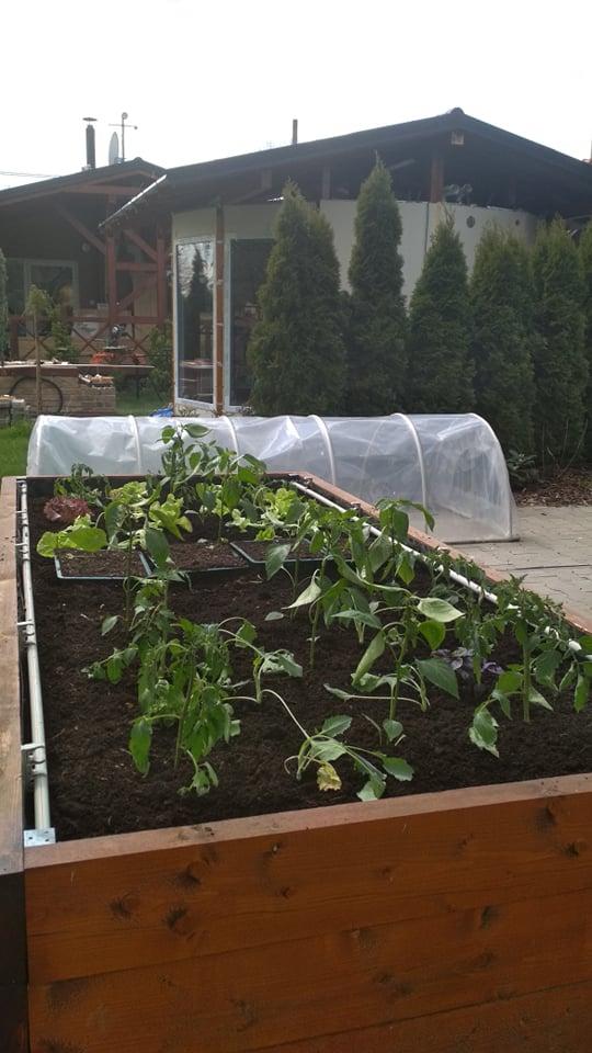 Vyvýšené záhony a úžitková záhrada - sezóna 2021 ... príprava, sadenie, starostlivosť - Obrázok č. 36