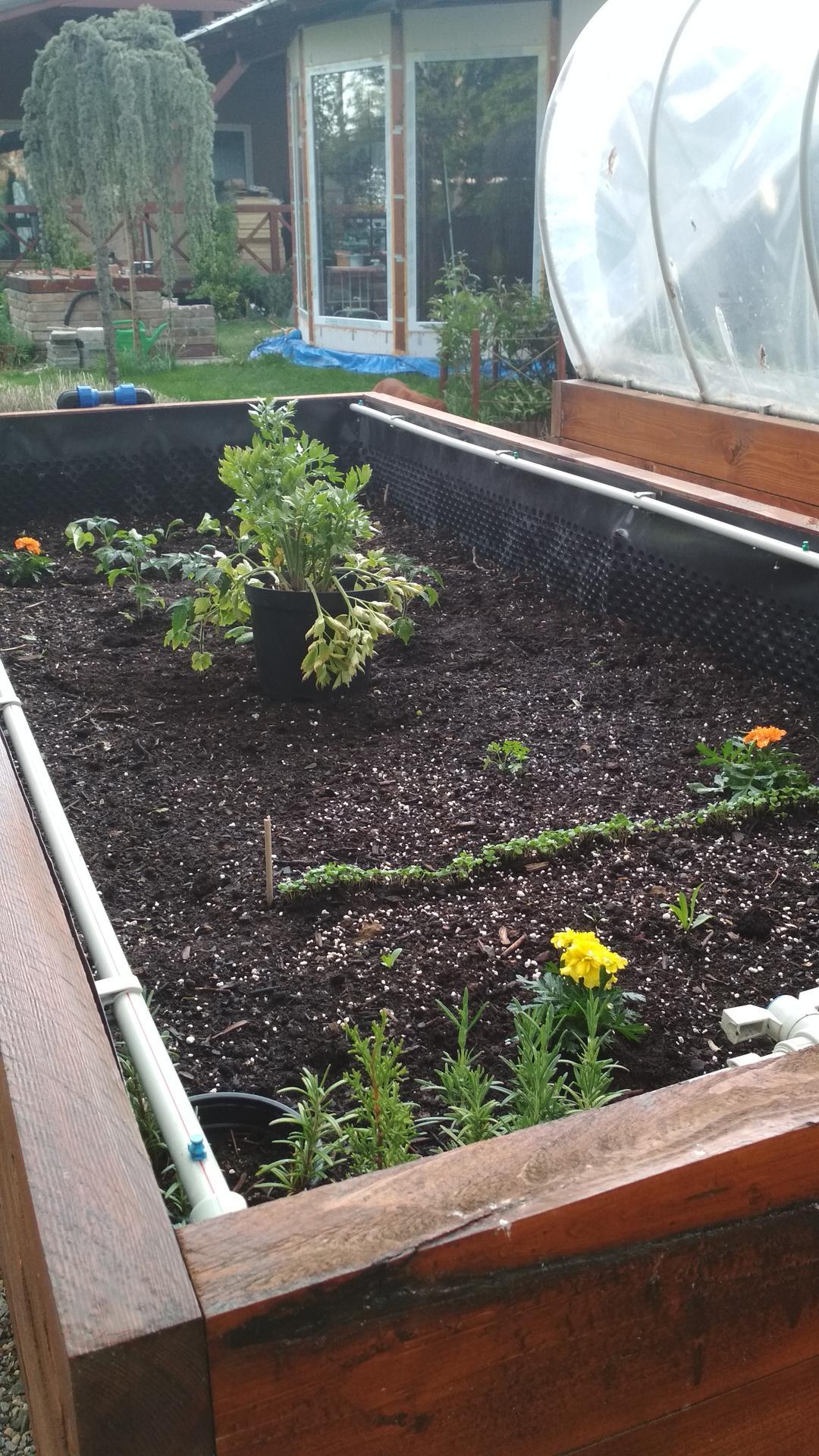 Vyvýšené záhony a úžitková záhrada - sezóna 2021 ... príprava, sadenie, starostlivosť - Obrázok č. 45
