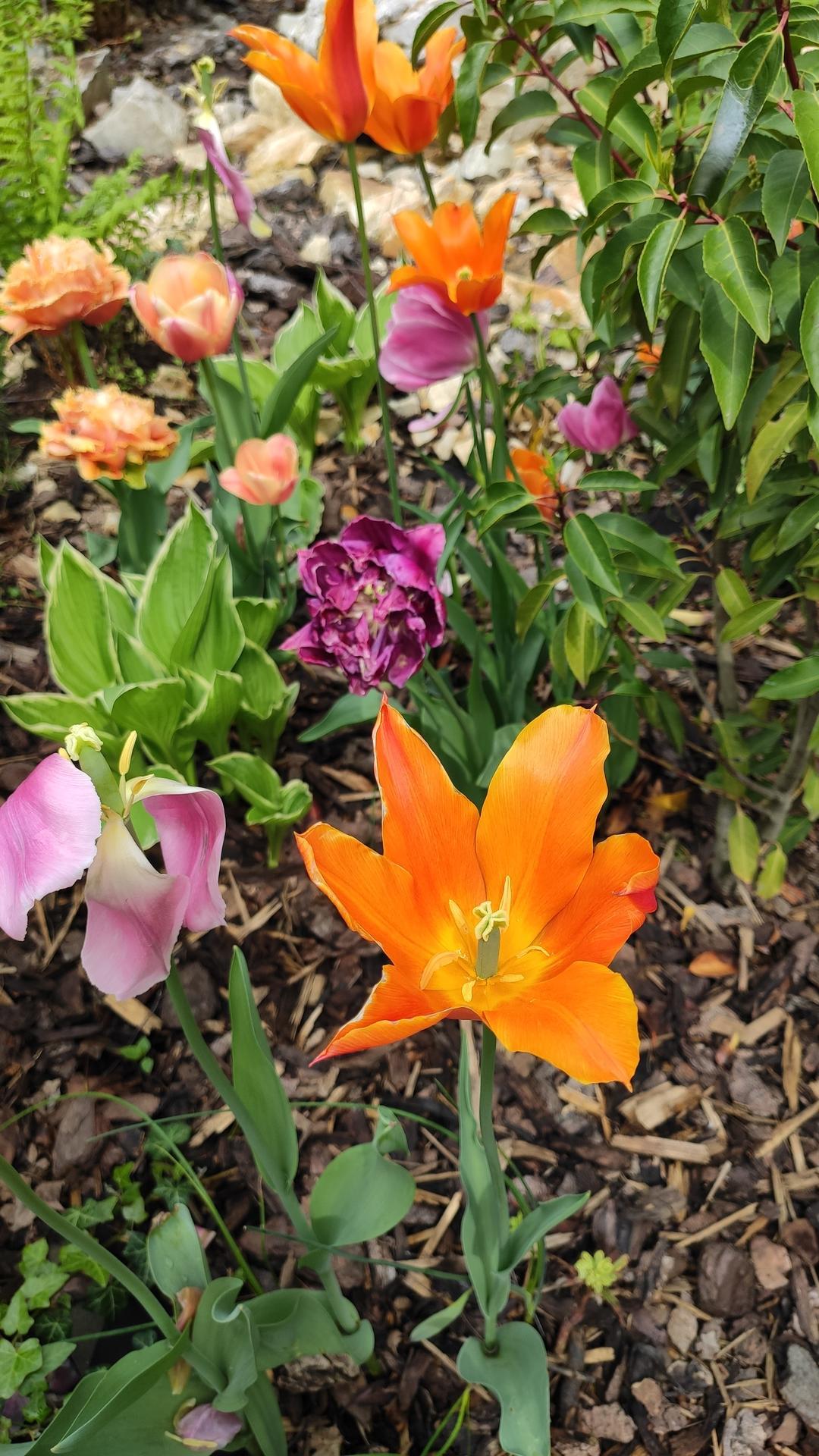 záhrada vidiecka, farebná rok 2021 - Obrázok č. 73