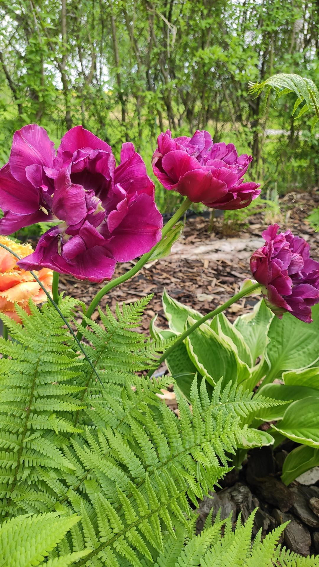 záhrada vidiecka, farebná rok 2021 - Obrázok č. 67