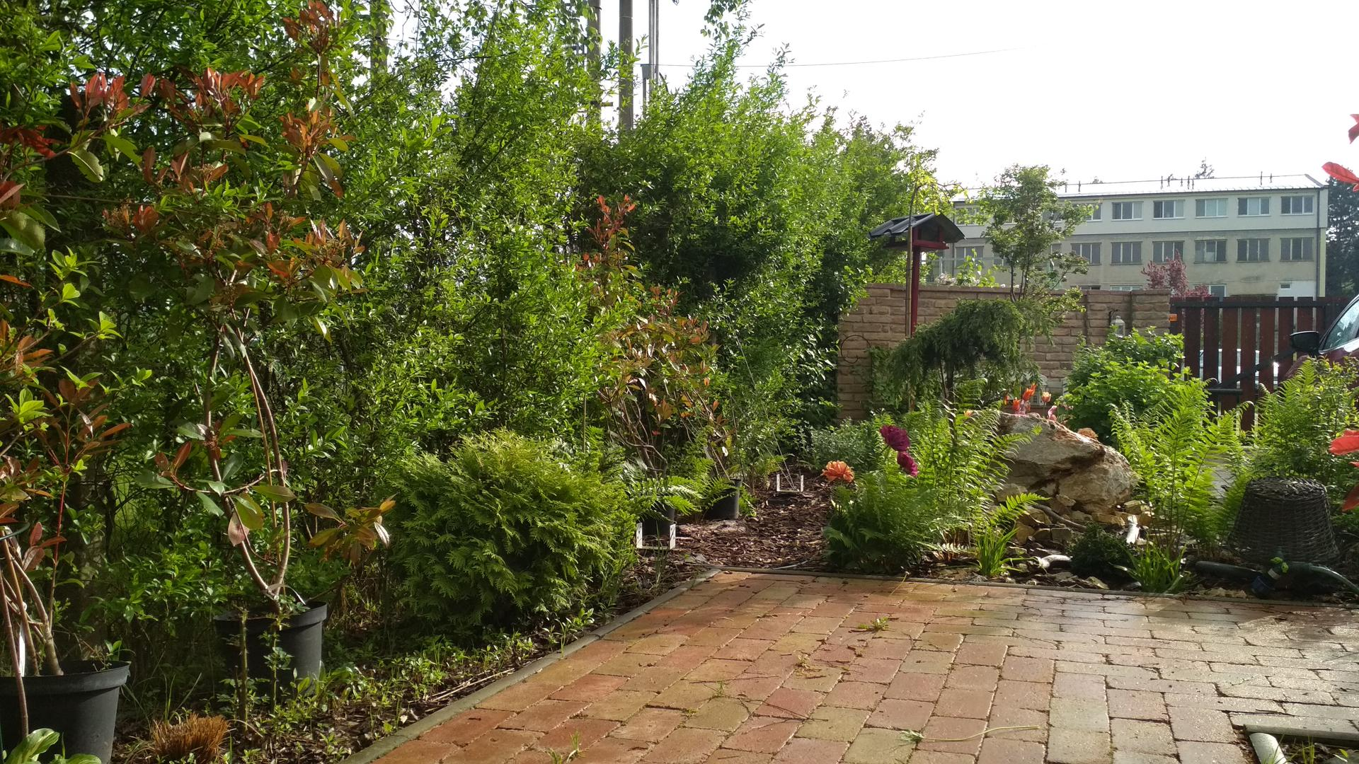 záhrada vidiecka, farebná rok 2021 - Obrázok č. 59