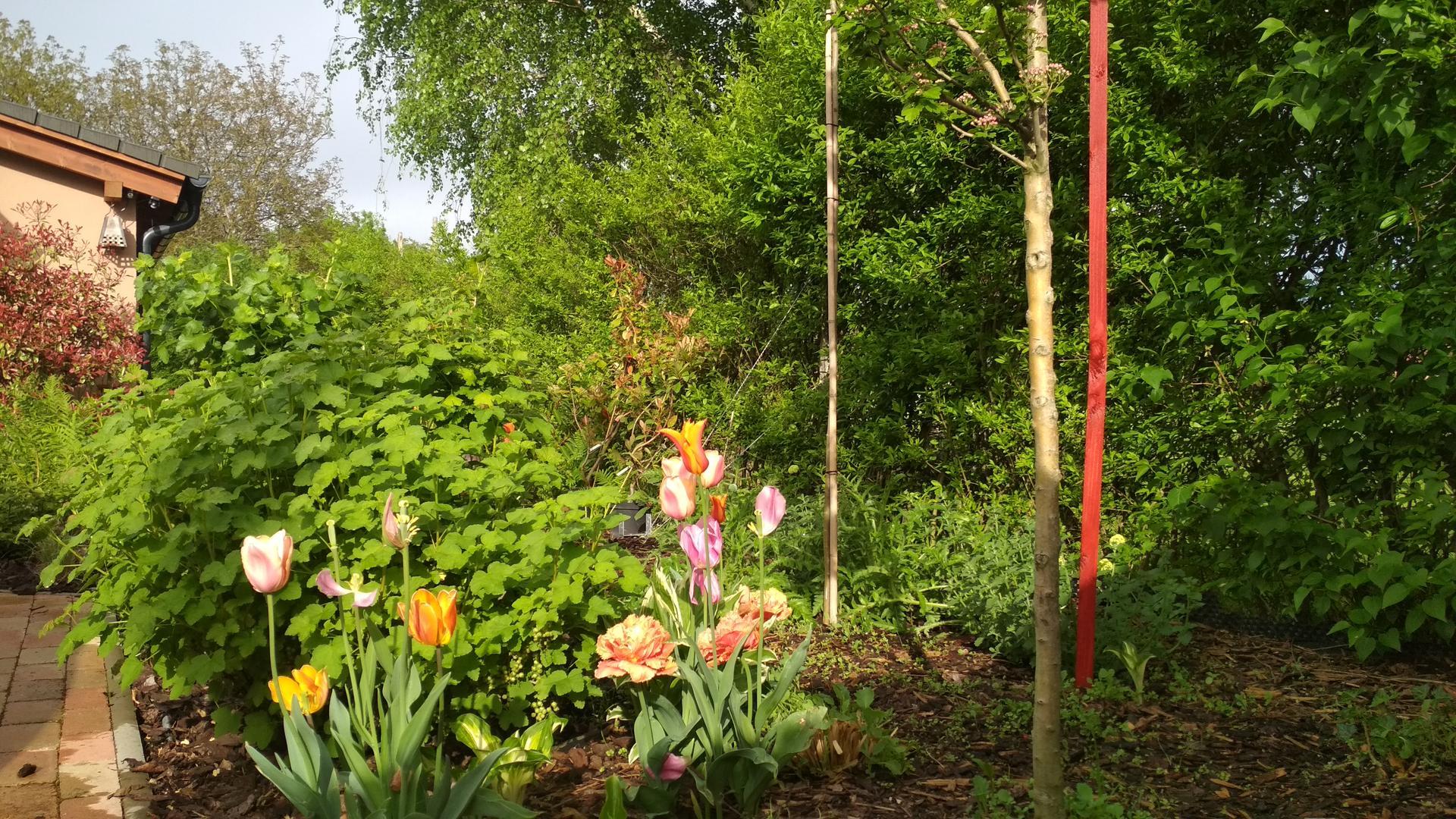 záhrada vidiecka, farebná rok 2021 - Obrázok č. 55