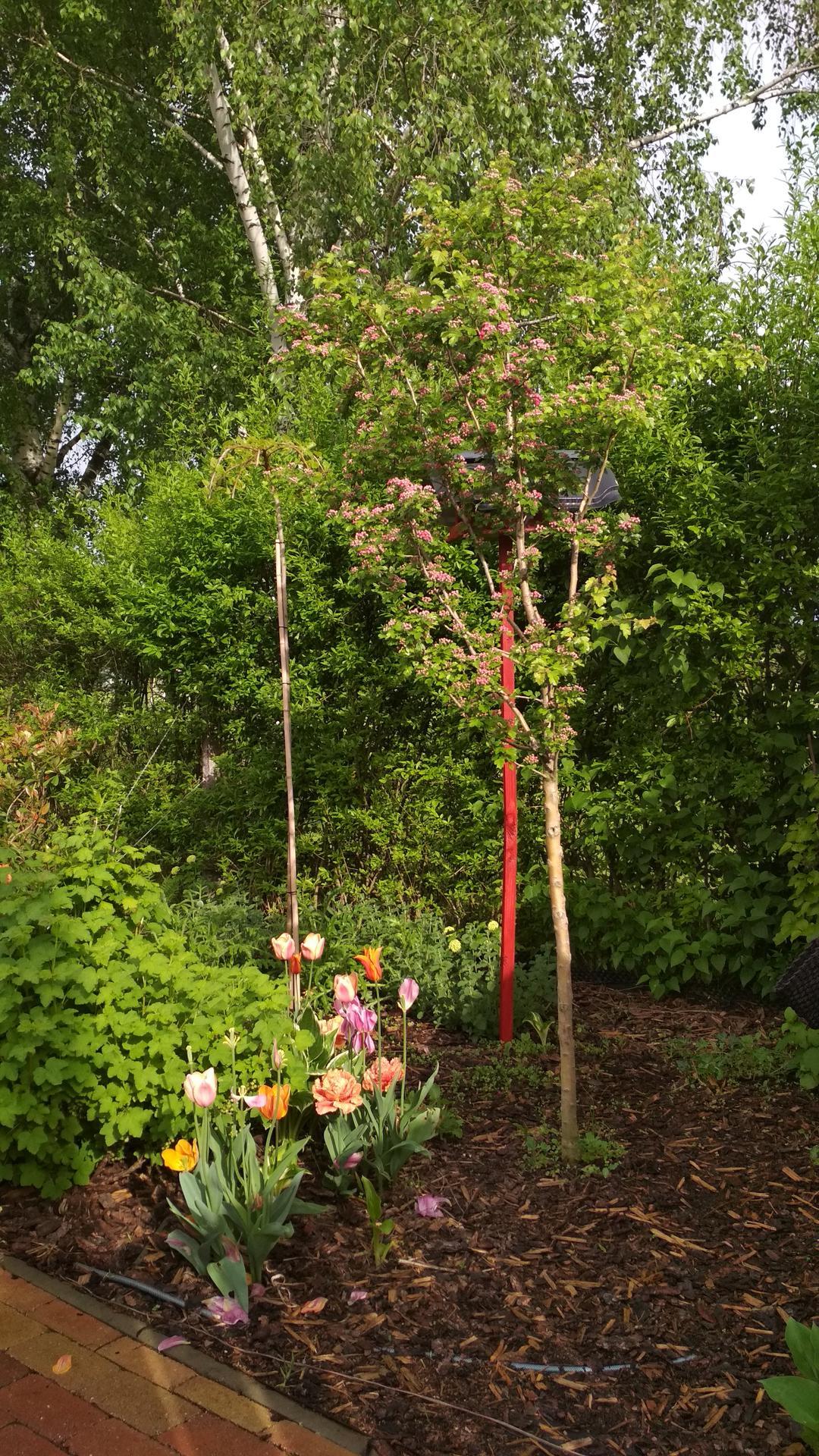 záhrada vidiecka, farebná rok 2021 - Obrázok č. 56