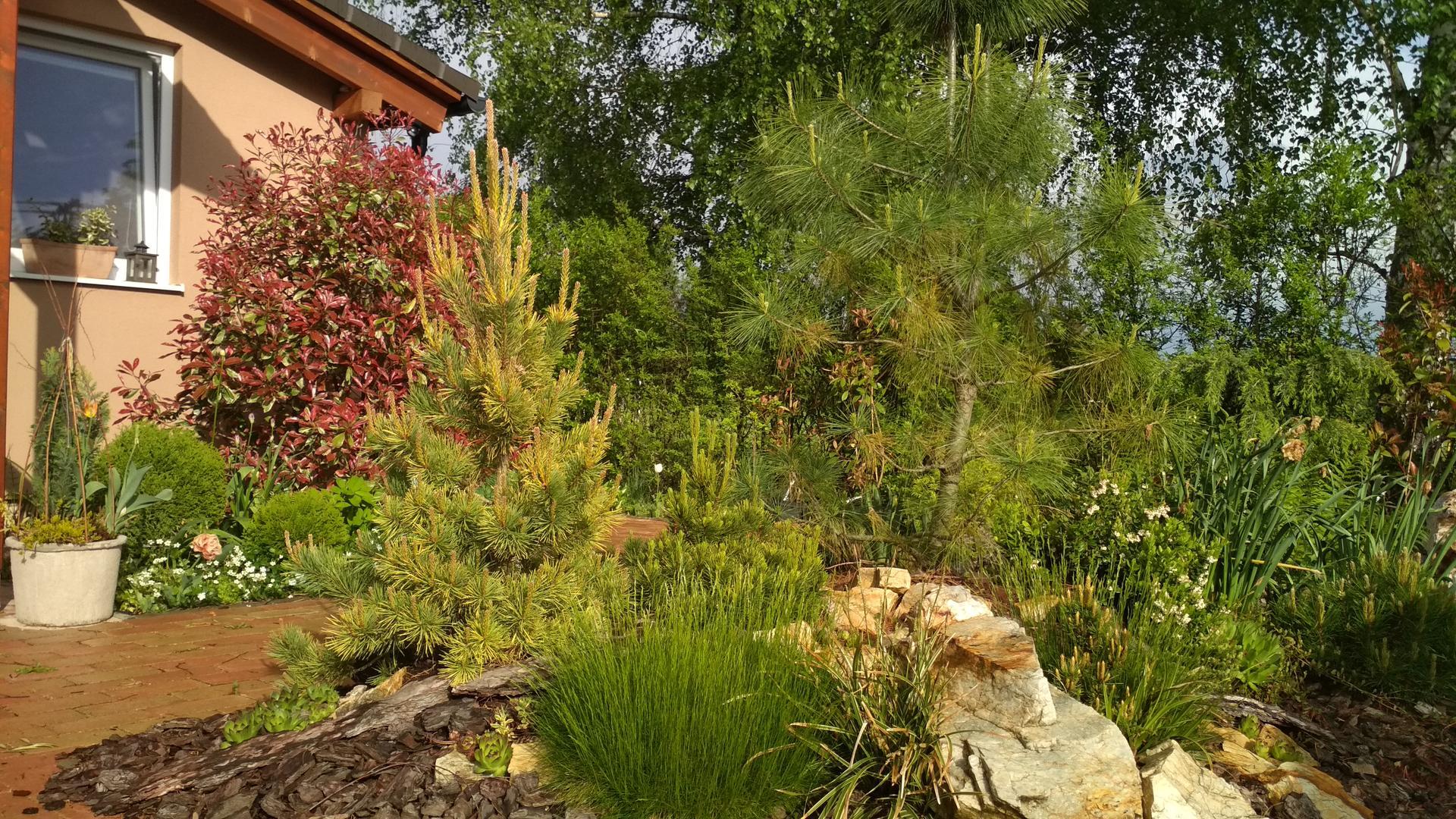 záhrada vidiecka, farebná rok 2021 - Obrázok č. 48