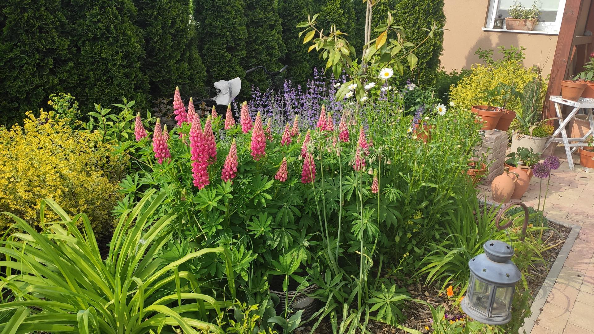 záhrada vidiecka, farebná rok 2021 - Obrázok č. 85
