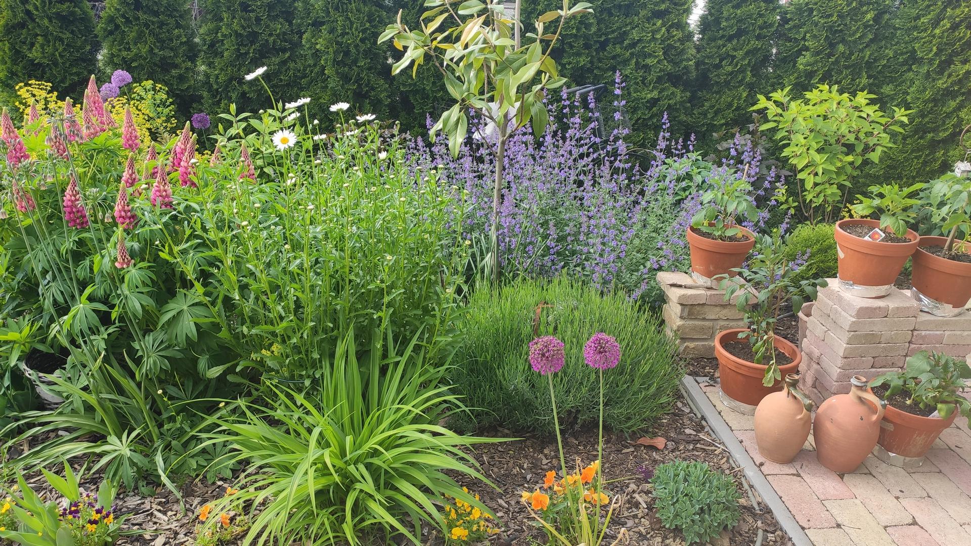 záhrada vidiecka, farebná rok 2021 - Obrázok č. 86