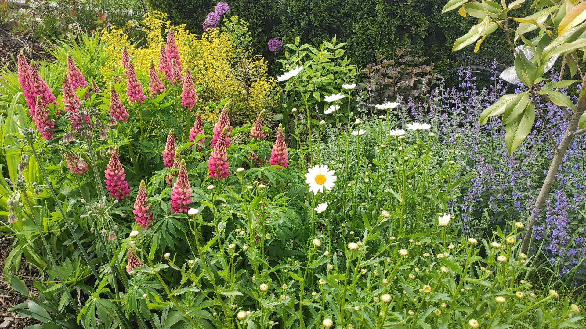 záhrada vidiecka, farebná rok 2021 - Obrázok č. 83