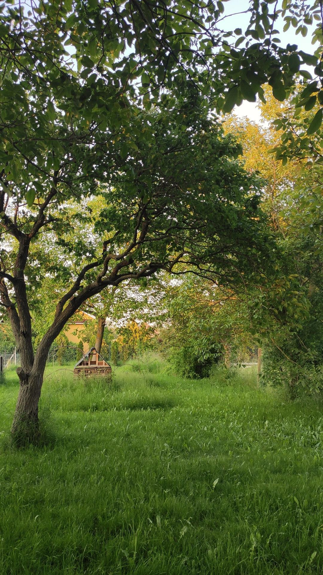Vyvýšené záhony a úžitková záhrada - sezóna 2021 ... príprava, sadenie, starostlivosť - Obrázok č. 56