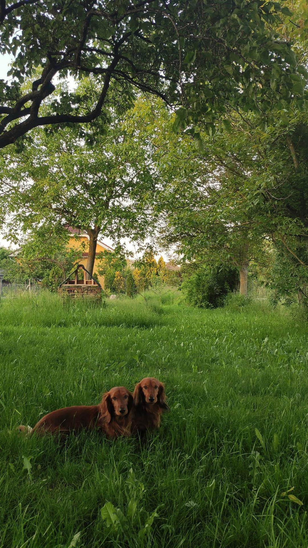 Vyvýšené záhony a úžitková záhrada - sezóna 2021 ... príprava, sadenie, starostlivosť - Obrázok č. 48