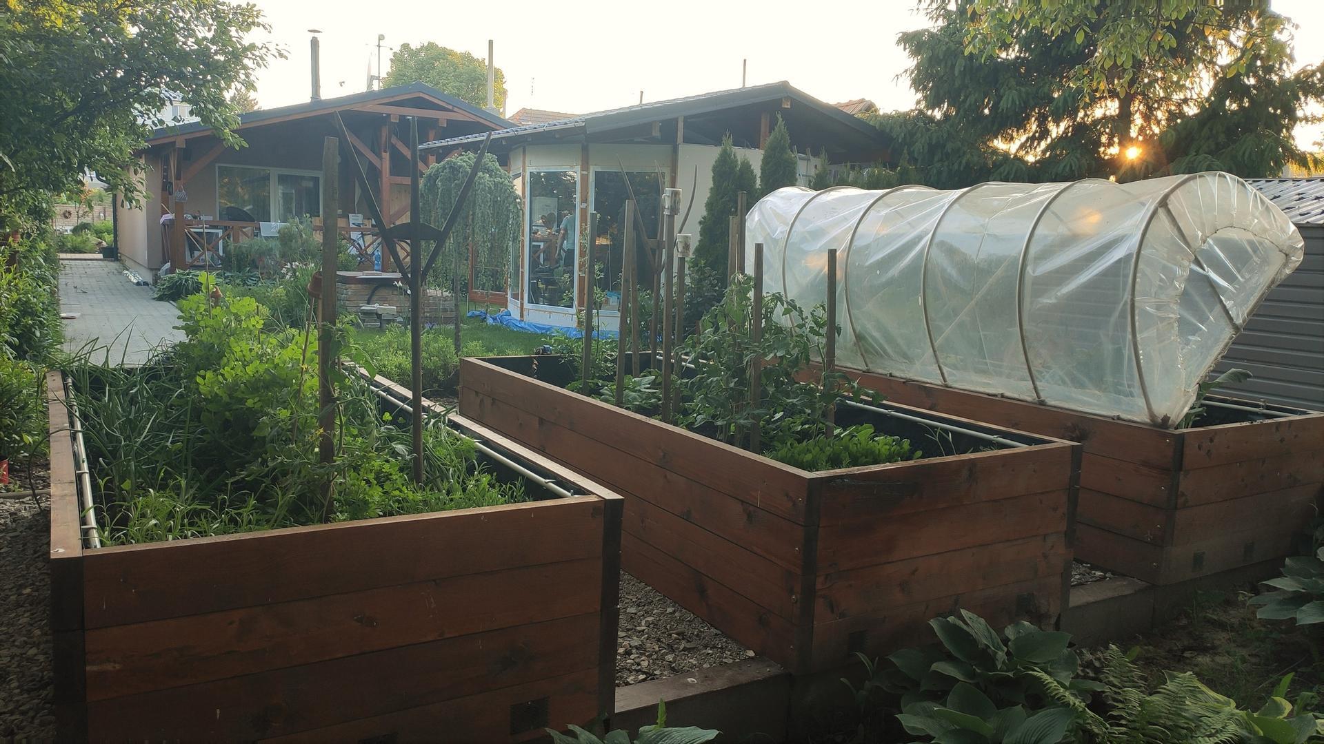 Vyvýšené záhony a úžitková záhrada - sezóna 2021 ... príprava, sadenie, starostlivosť - Obrázok č. 53