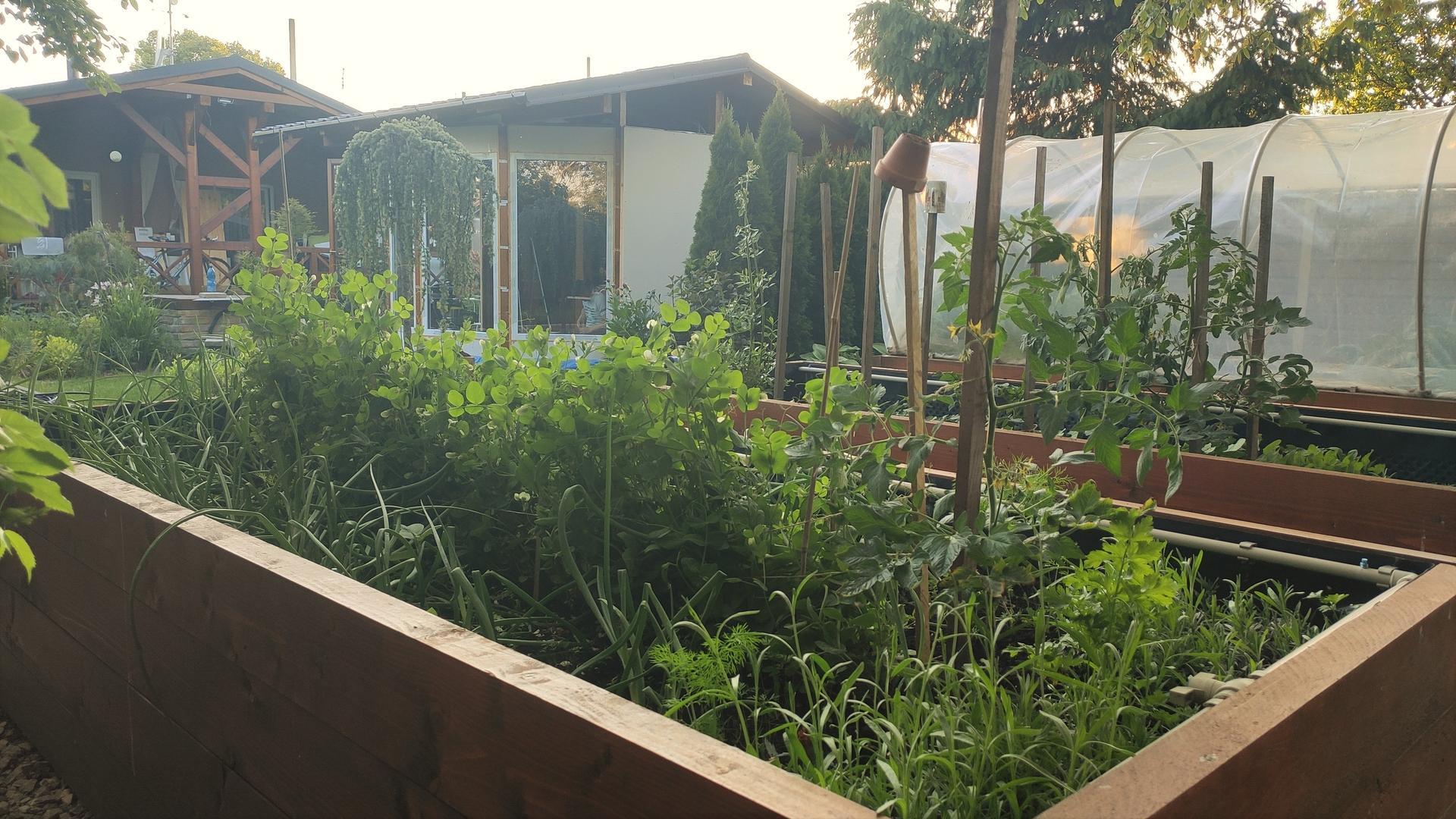 Vyvýšené záhony a úžitková záhrada - sezóna 2021 ... príprava, sadenie, starostlivosť - Obrázok č. 50