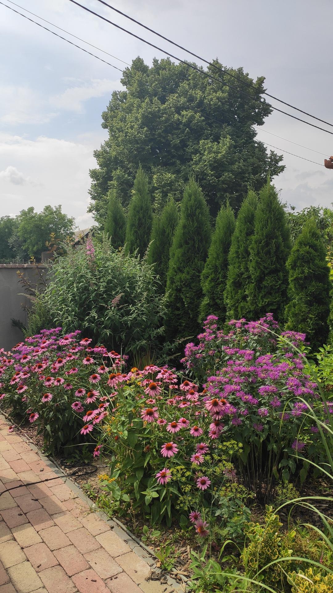 záhrada vidiecka, farebná rok 2021 - Obrázok č. 117