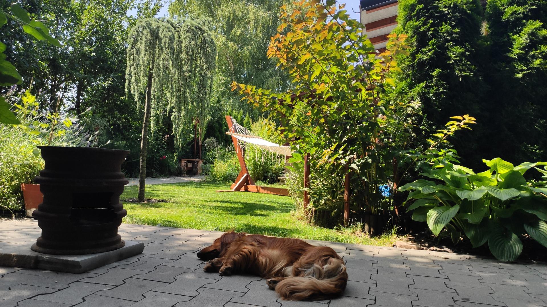 záhrada vidiecka, farebná rok 2021 - Obrázok č. 143