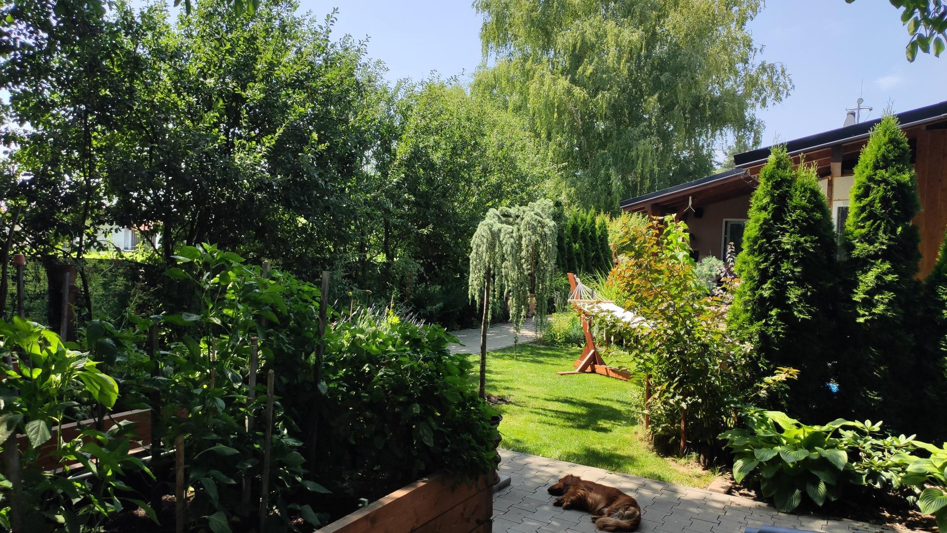Vyvýšené záhony a úžitková záhrada - sezóna 2021 ... príprava, sadenie, starostlivosť - Obrázok č. 66