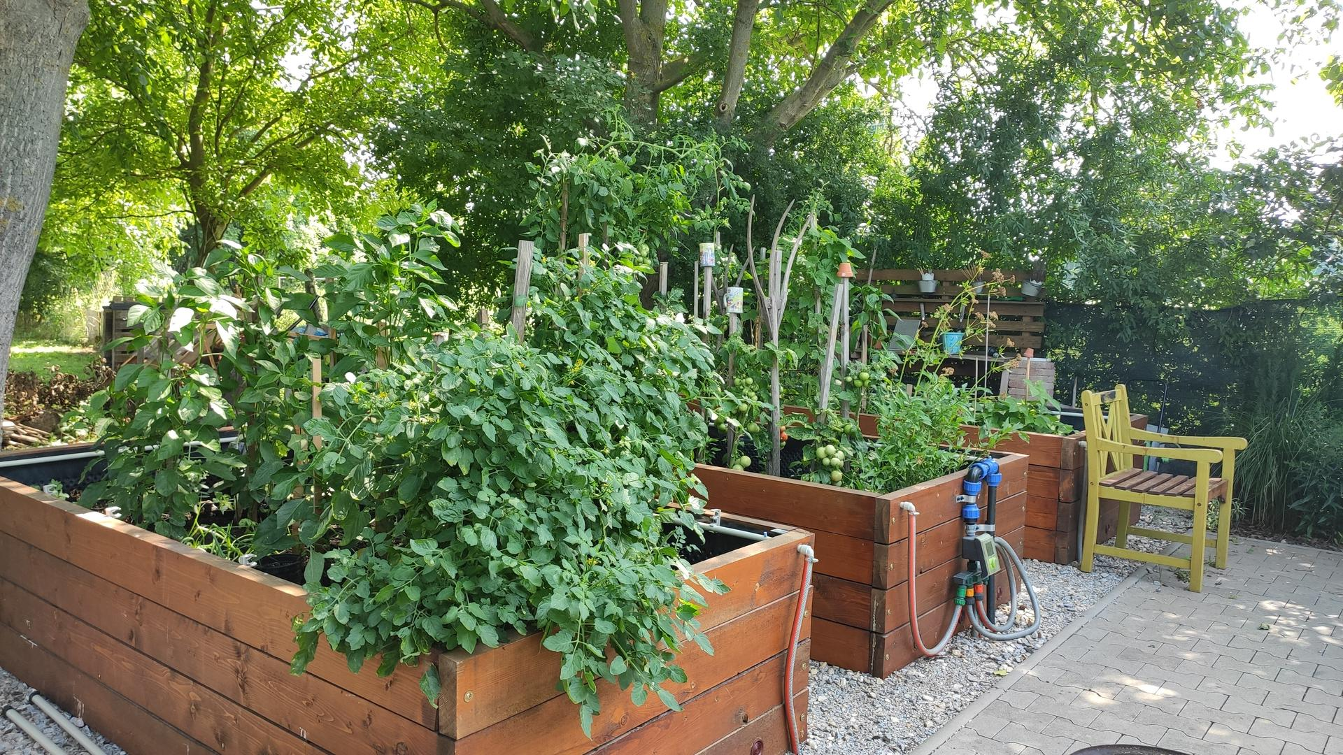 Vyvýšené záhony a úžitková záhrada - sezóna 2021 ... príprava, sadenie, starostlivosť - Obrázok č. 61