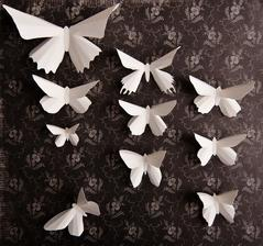 motýliky!