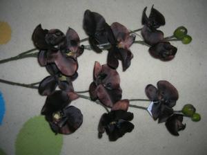 hnedé orchidey