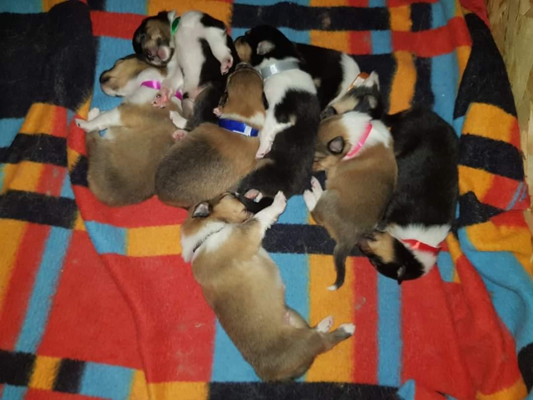 Za 6 týdnů už bude jedno z nich bydlet u nás 😍. Nějaké tipy na výbavu pro štěně? - Obrázek č. 1