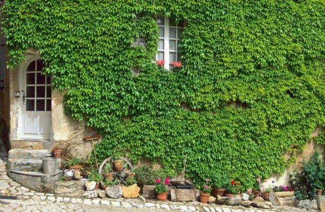 Zelene fasady - Obrázok č. 81